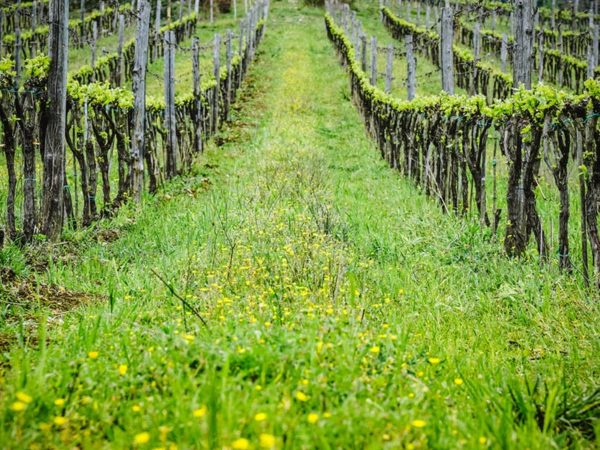 biodynamic brunello tour