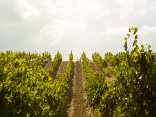 Biodynamic Brunello wine tour - Private wine tour in Tuscany