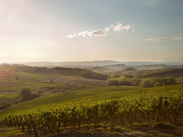 Chianti wine tour - private wine tour in Tuscany